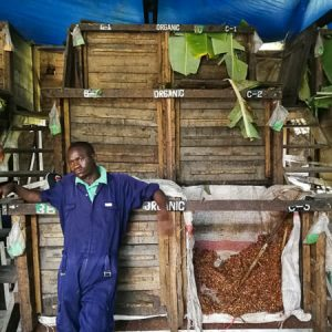 Team member and fermented cacao beans at Kokoa Kamili | Wasabini