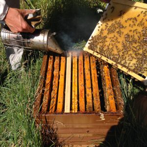 Beekeeping - creating new hives