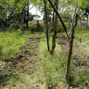 Preparing the garden for spinach | Wasabini